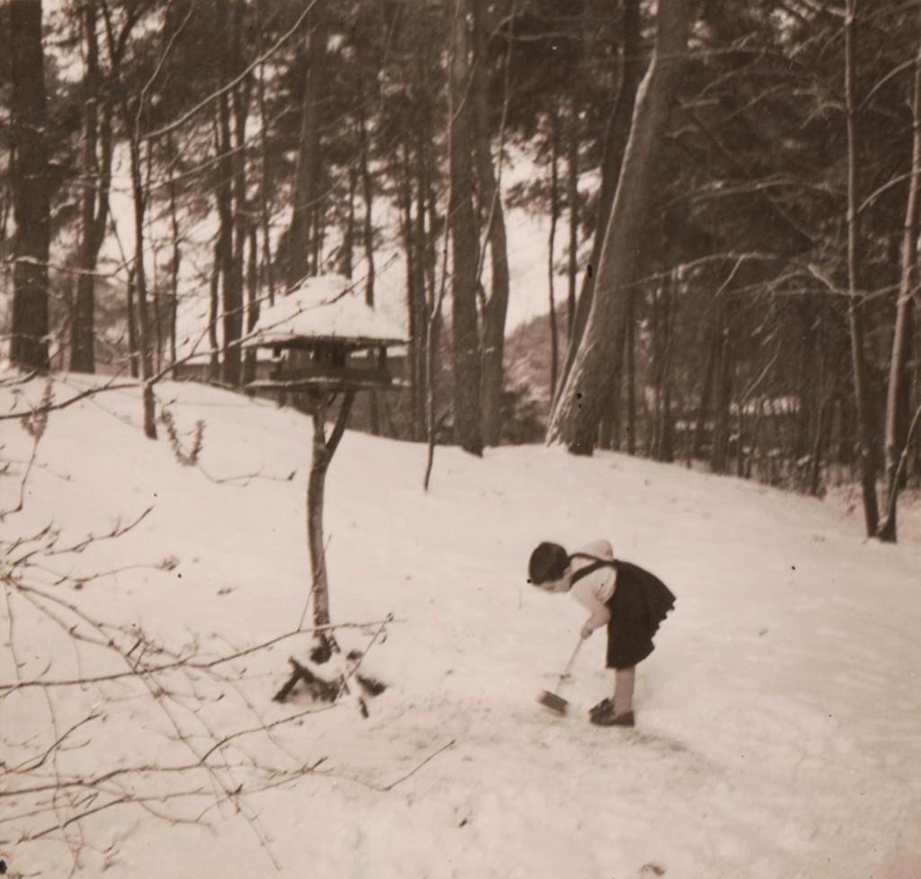 Sneeuw Het Boschhuis